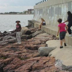 Marine Science Center partners with Massachusetts Promise Fellowship
