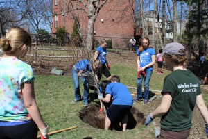 Scholars plant trees as part of Civic Engagement.