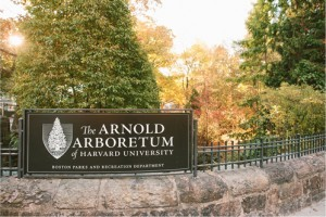 arnold-arboretumwoodsource
